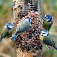 bird feeders blue tits