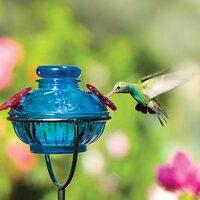 hummingbird feeder tips and help