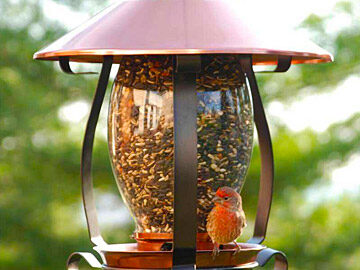 Designer Bird Feeders