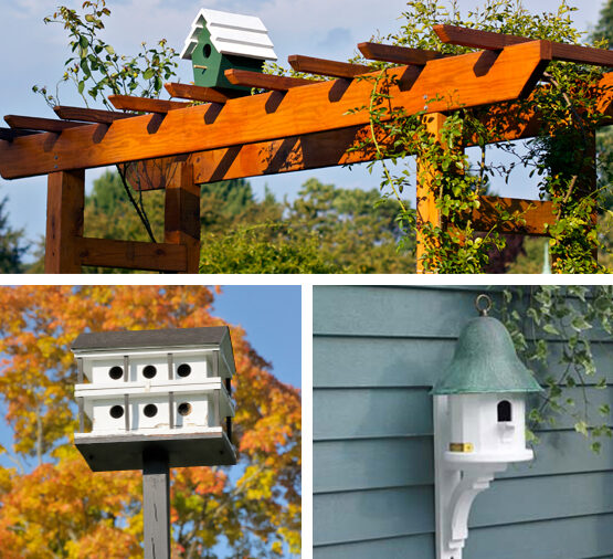 Bird House Hanging and Mounting Locations