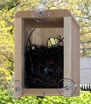 Window Nest Box