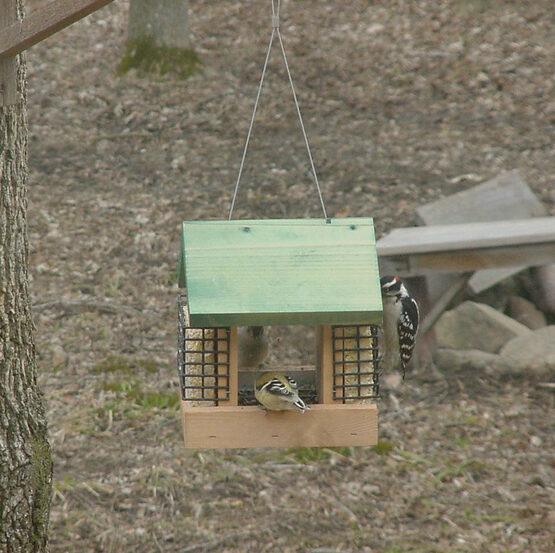 2 Suet & A Seed Bird Feeder