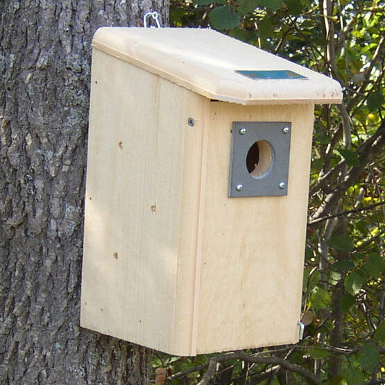 Backyard Wooden Birdhouse