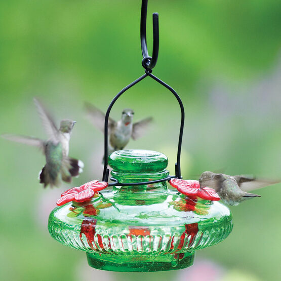 hanging yard stake p glass envy htm hummingbird pixie feeder