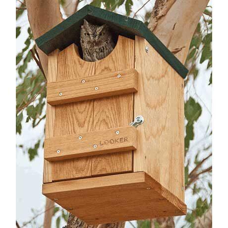 Delightful Screech Owl Bird House