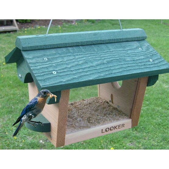 Bluebird and Chickadee Bird Feeder
