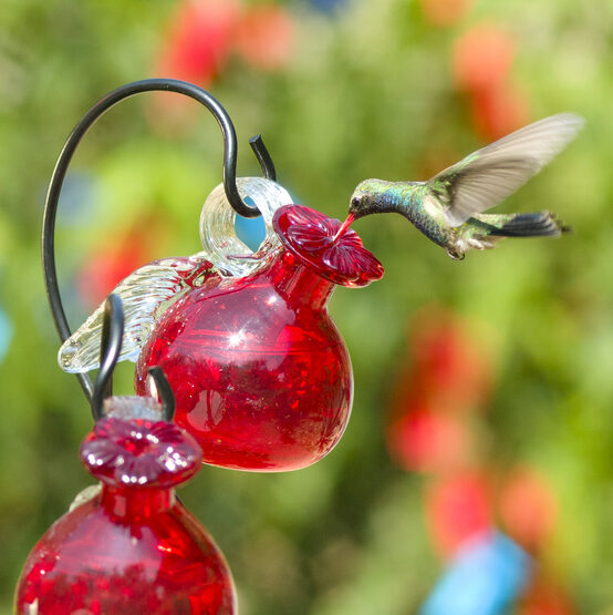 Pixie Hanging Glass Hummingbird Feeder