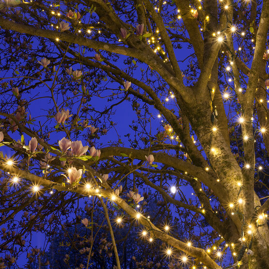 Warm White Outdoor LED String Lights, 50 ct, 5MM