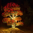 Red Outdoor LED String Lights, 50 ct, 5MM