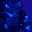 Raspberry LED String Lights, Blue, Green Wire