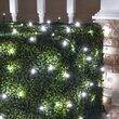 4' x 6' 5mm LED Net Lights, Cool White, Green Wire