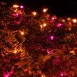 4' x 6' Net Lights, Purple, Orange, Black Wire