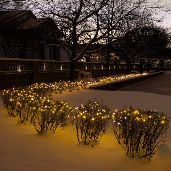 Standard Gold Frost Mini String Lights