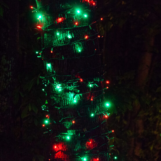 SoftTwinkle Wide Angle LED Mini Lights, Red, Green, Green Wire