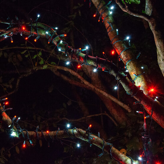 SoftTwinkle TM Wide Angle LED Mini Lights, Red, Cool White, Green Wire