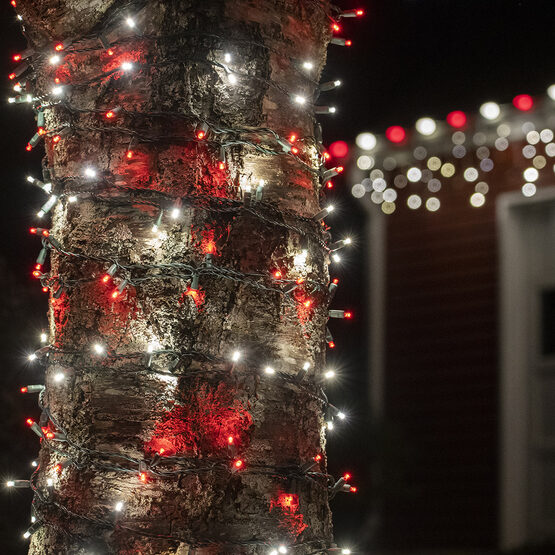 Wide Angle LED Mini Lights, Red, Cool White, Green Wire