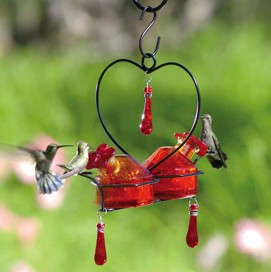 Hummingbird Feeder Tips Yard Envy