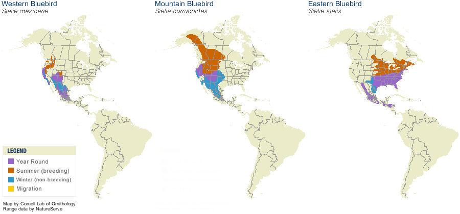bluebird-map.jpg