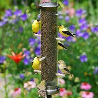 tube bird feeders