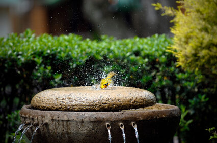 Attract more birds to your garden with these easy tips!