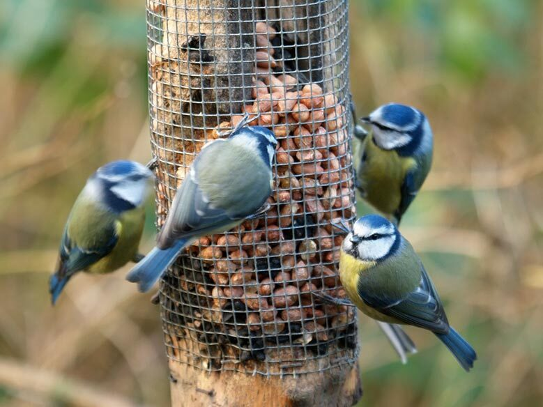 Attirant Attract More Birds To Your Garden With These Easy Tips!