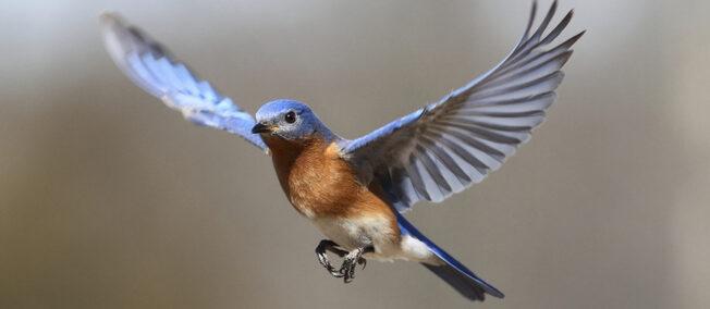 bird-feature-000012297317.jpg
