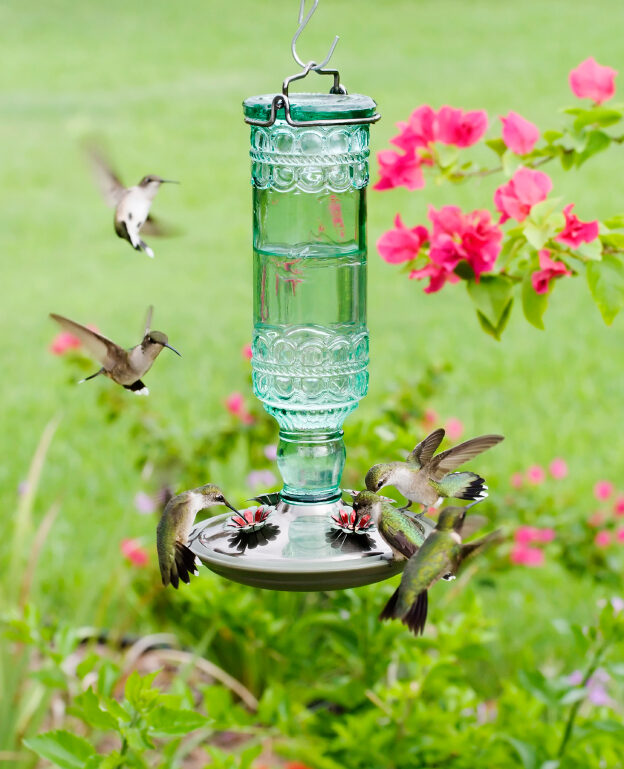 How To Attract Birds To Your Backyard attracting birds to your feeder - yard envy