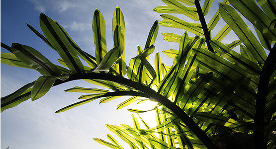 realistic-lighted-palm-fronds.jpg