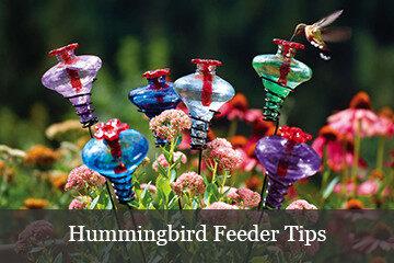 Hummingbird Feeder Tips