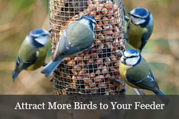 Attract More Birds to your Bird Feeder