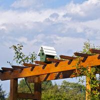 Creating a Bird Garden
