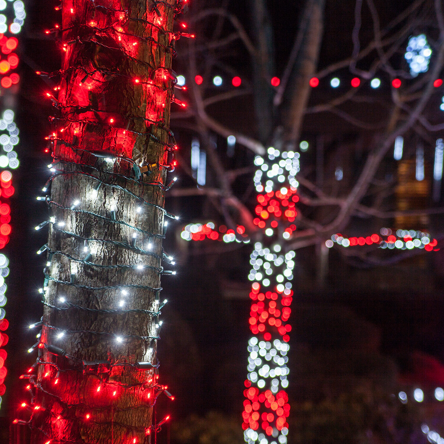 Outdoor trees wrapped with Christmas string lights