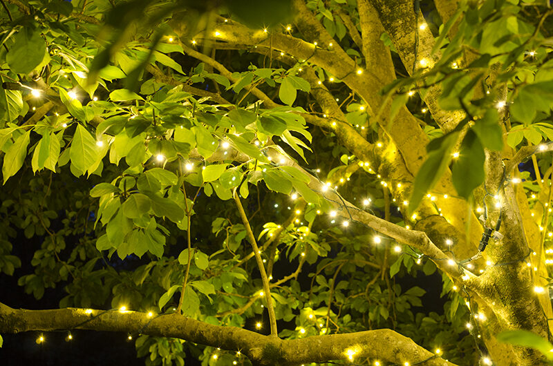 Tree Lights For Spring And Summer Yard Envy