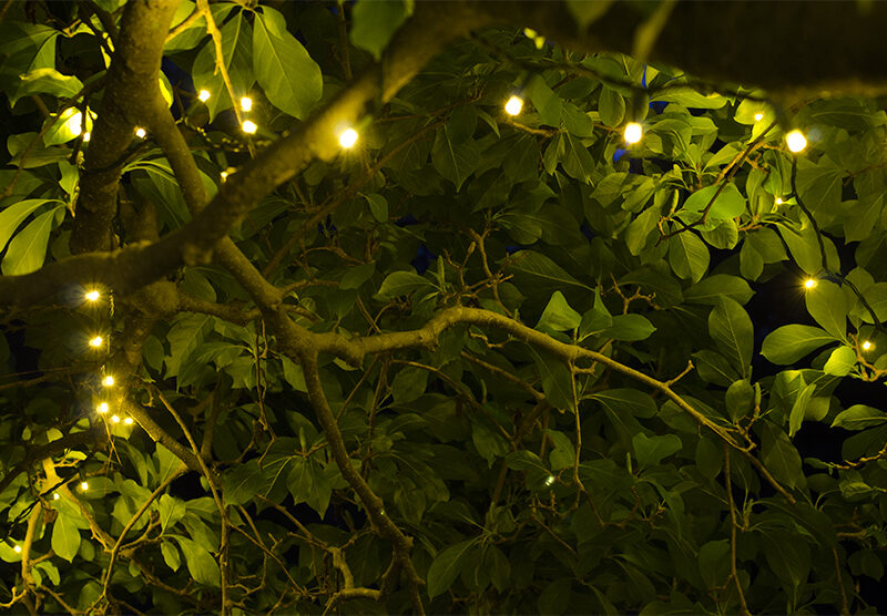 Tree Branches Wrapped With White String Lights