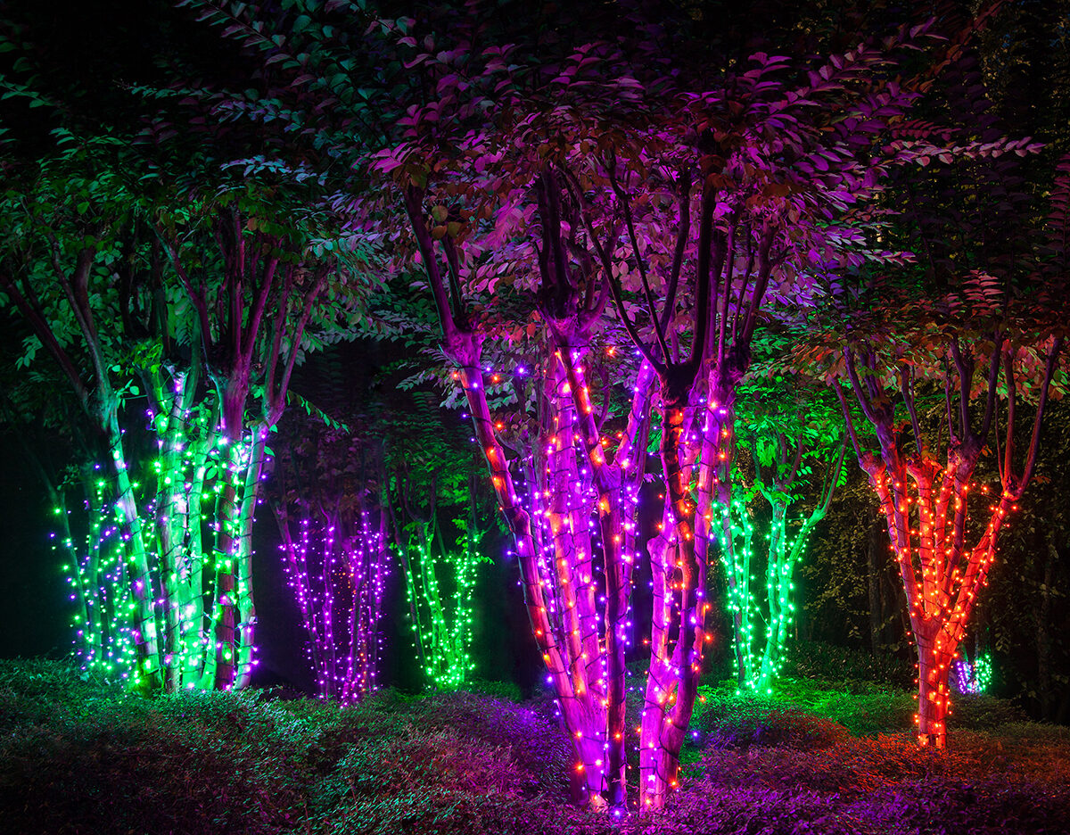 Wrap Trees with Halloween String Lights to Create an Eerie Electric Forest!