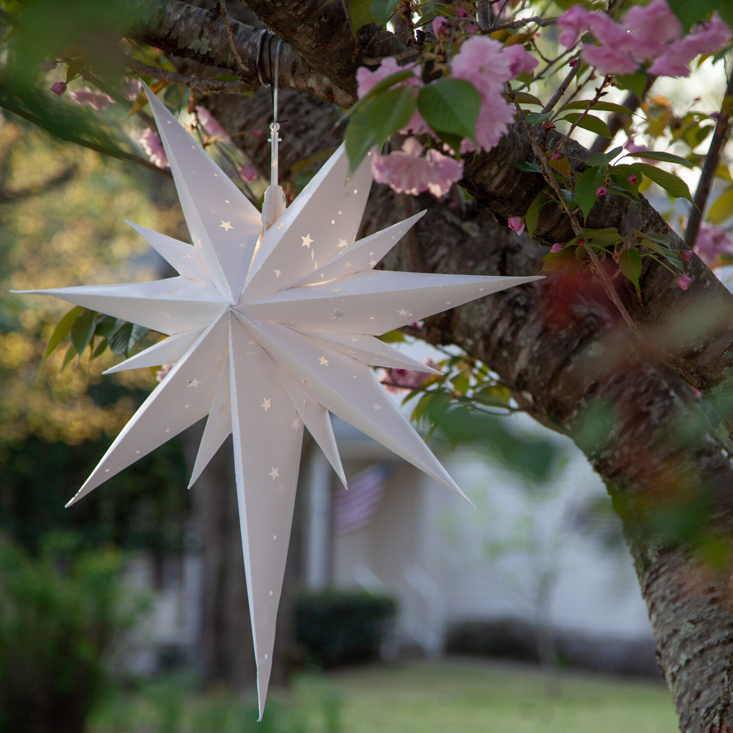 Star Decorations Hanging from Tree Branches