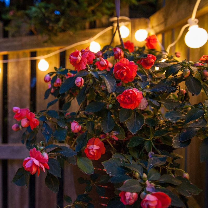 White Garden Fence Lights